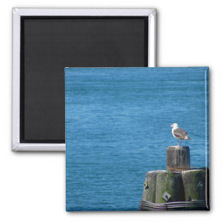 Seagull Looking at Ocean 2 Inch Square Magnet
