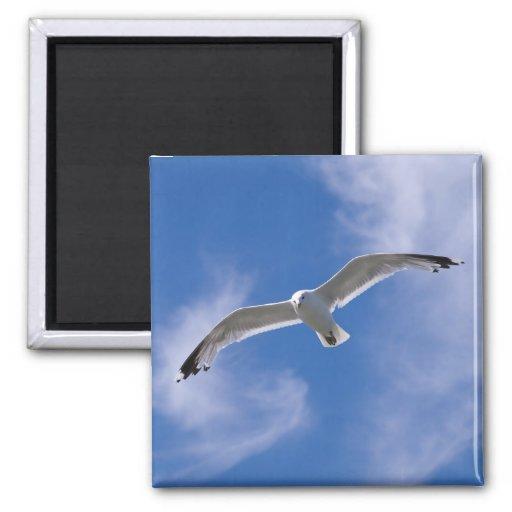 Seagull Fridge Magnet