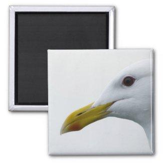 Seagull Magnet 1 magnet