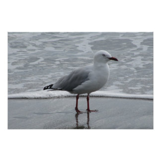 Seagull Near the Water's Edge Poster