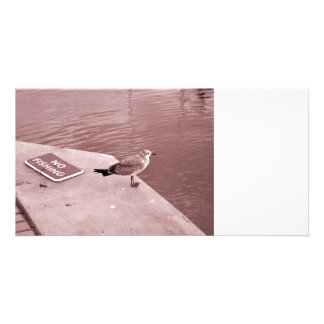 seagull no fishing cant read sepia card