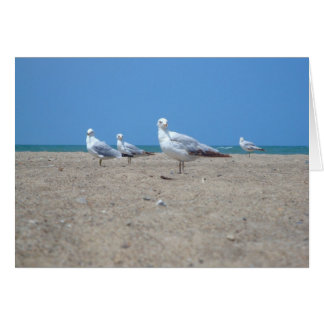 Seagull notecard stationery note card