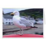 Seagull Notecard Note Card