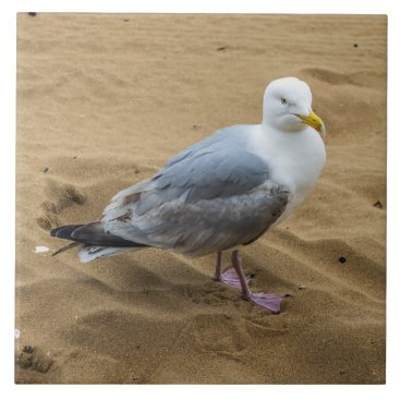 Seagull on a beach ceramic photo tile
