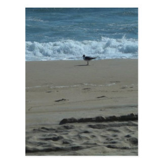 Seagull on a Beach Postcard