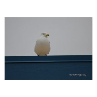 Seagull on a Blue Roof II Poster