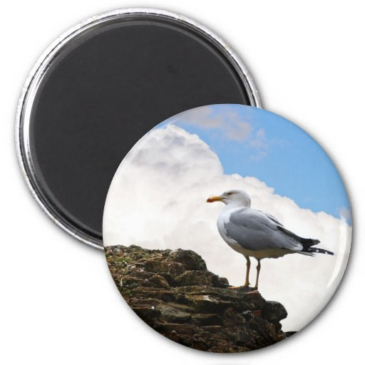 Seagull on a Brick-Wall in Rome Refrigerator Magnets
