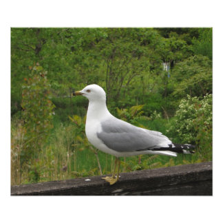 Seagull on a Fence Rail Photograph