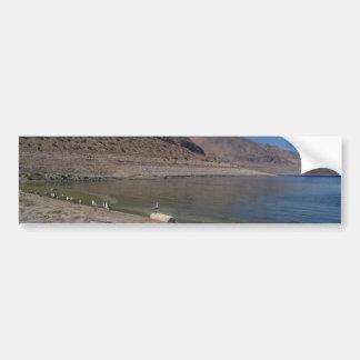 SeaGull on a Log by Walker Lake Car Bumper Sticker