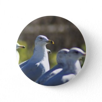 Seagull on a Rail Buttons