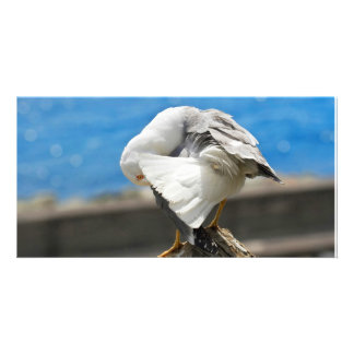 Seagull on a rock photo cards