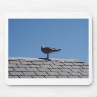 Seagull On A Slate Roof Mouse Pad