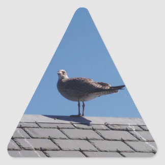 Seagull On A Slate Roof Triangle Sticker