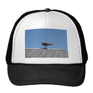 Seagull On A Slate Roof Trucker Hat