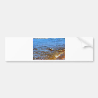 SEAGULL ON A WAVE QUEENSLAND AUSTRALIA CAR BUMPER STICKER
