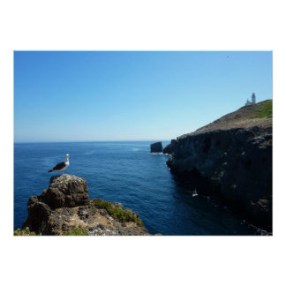 Seagull on Anacapa Island at Channel Islands Poster
