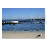 Seagull on Beach, Blank Note Card