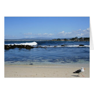Seagull on Beach, Blank Note Card