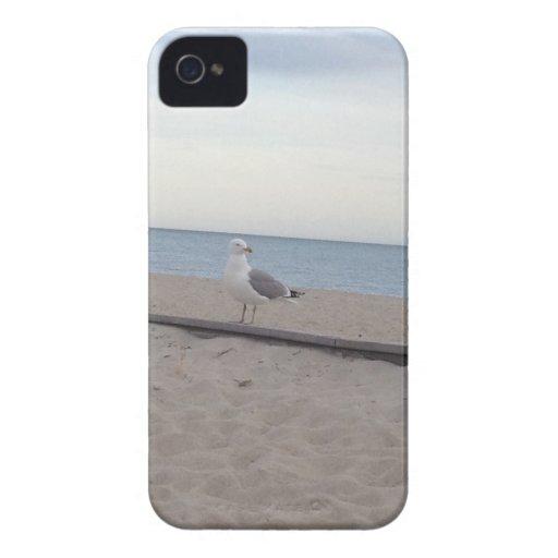 Seagull on Beach iPhone 4 Case