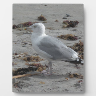 Seagull on beach plaque
