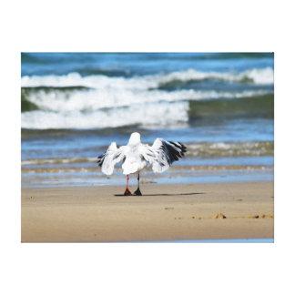 SEAGULL ON BEACH QUEENSLAND AUSTRALIA CANVAS PRINT