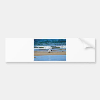 SEAGULL ON BEACH QUEENSLAND AUSTRALIA CAR BUMPER STICKER