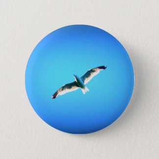 seagull on blue button