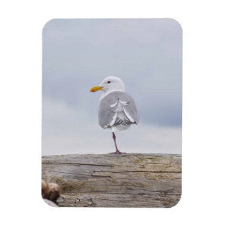 Seagull On One Leg Magnet