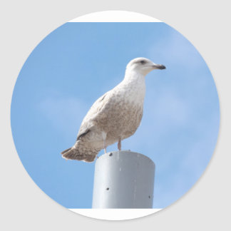 Seagull on pole classic round sticker