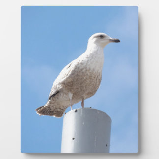 Seagull on pole plaque