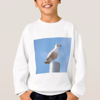 Seagull on pole sweatshirt