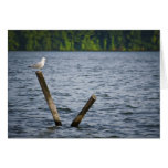 Seagull on Post Greeting Card.