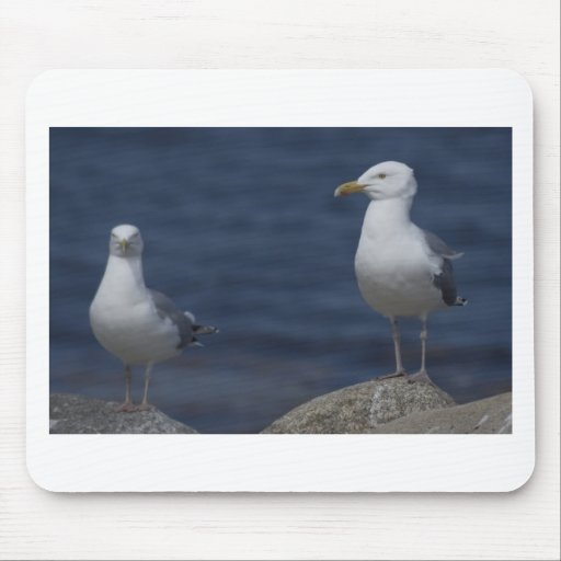 Seagull On Rock Mouse Pad