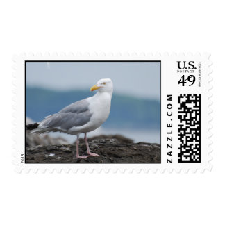 Seagull on Rock Postage Stamp