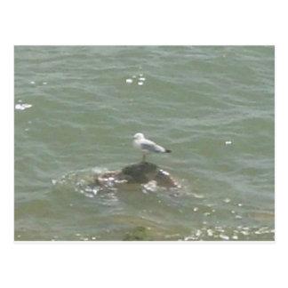 Seagull on rock postcard