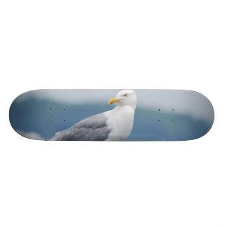 Seagull on Rock Skateboard