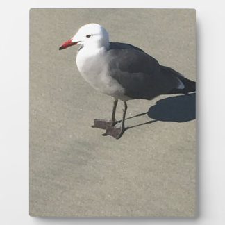 Seagull on Sandy Beach Plaque