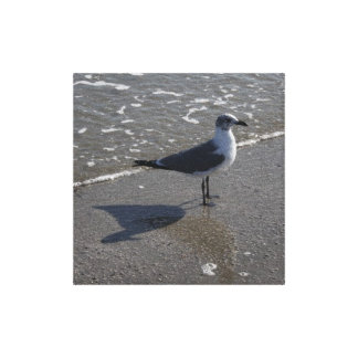 Seagull on the Beach Art Print