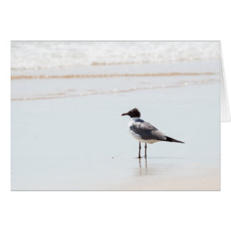 Seagull on the Beach Blank Greeting Card