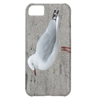 Seagull on the Beach iPhone 5C Cases