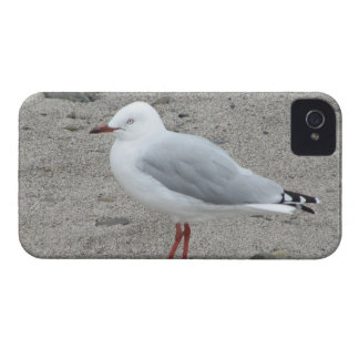 Seagull on the Beach iPhone 4 Cover