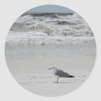 Seagull on the Beach Classic Round Sticker