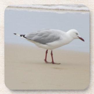 Seagull on the Beach Coaster