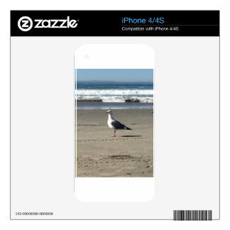 Seagull on the Beach Decals For The iPhone 4S