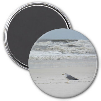 Seagull on the Beach Refrigerator Magnets