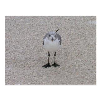 Seagull on the Beach Postcard