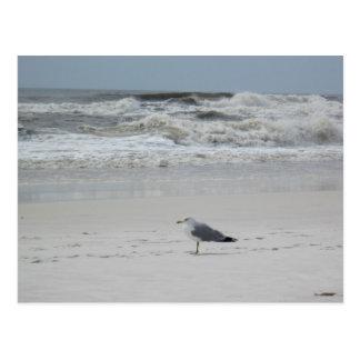 Seagull on the Beach Postcards