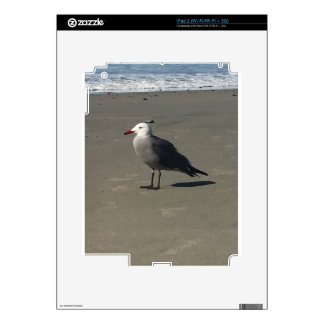 Seagull on the Beach Skin For iPad 2
