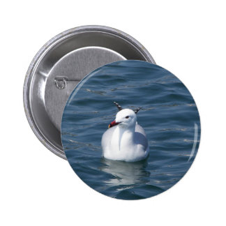 Seagull on the water buttons