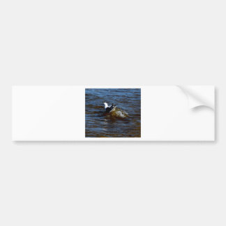 SEAGULL ON WAVE QUEENSLAND AUSTRALIA CAR BUMPER STICKER
